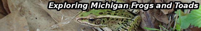 Exploring Michigan's Frogs and Toads